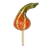FALL GOURD ON 20 IN STICK