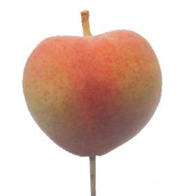 Fruit Peach 6cm on 50cm pick
