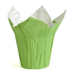 COVER-UPS WHITE KRAFT 4 IN GREEN