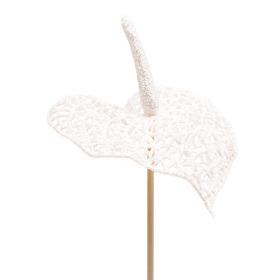 Glitter Anthurium 10cm on 50cm stick white