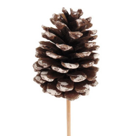 Xmas Pinecone 2.75 in on 20 in stick natural with white tips