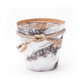 Pot Birch with Rope 6 in