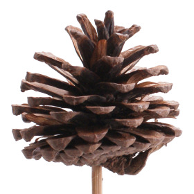 Pinecone 5-7cm on 50cm stick natural