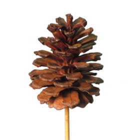 Xmas Pinecone 2.75 in on 20 in stick natural