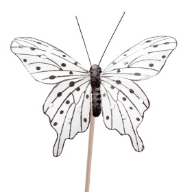 Butterfly Tropicana 8cm on 50cm stick white