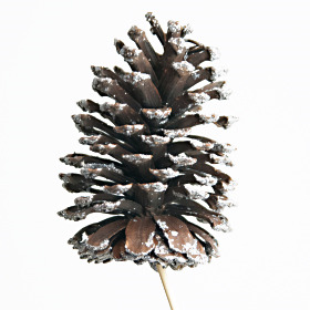 Christmas Pinecone natural 10-12cm with silver tips on 50cm