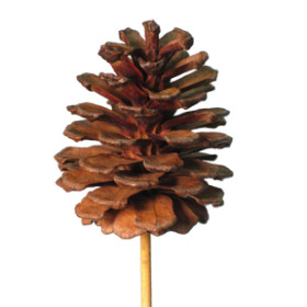Xmas Pinecone 4 in on 20 in stick natural