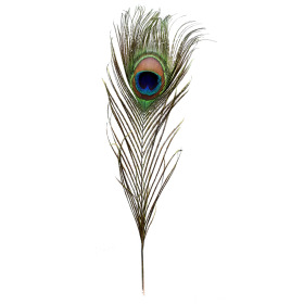 Peacock feather 16in