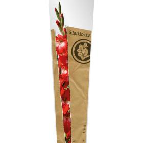 Sleeve Monoline Gladiolus 80x24x16cm