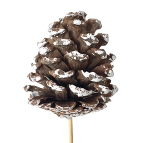 Christmas Pinecone natural 8-10cm with white tips on 50cm